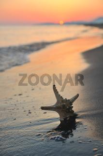 summer beach sunset with star on beach