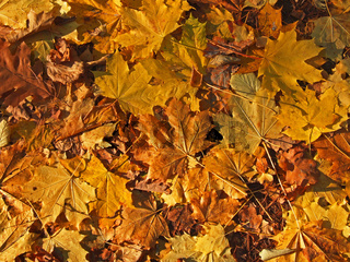 Herbstlaub / autumn leaves
