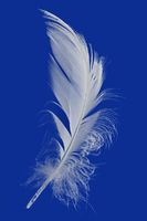Feather Cut Out