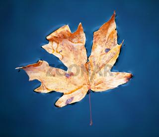 Autumn leaveas