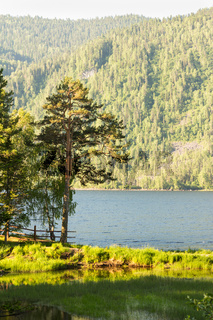 The lake Mountains Altai early in the morning summ