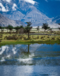 Sunny day view with trees at Nubra Valley. Himalaya mountains landscape. India, Ladakh, altitude 3100 m
