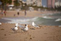 Möwen am langen Sandstrand  in Fort Lauderdale
