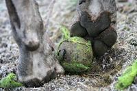 Hundepfoten mit Tennisball