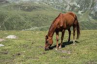 Pferde auf Almwiese in den Alpen