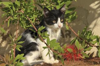 Junge Katze im Urwald