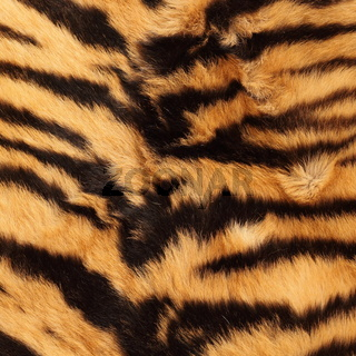 stripes on a tiger pelt