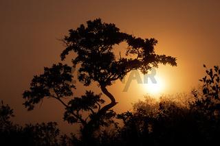 Savanna sunrise
