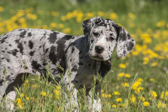 mischlingshunde aus deutschland