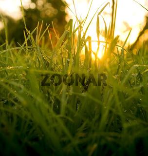 Grass Level Sunrise