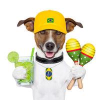 funny dog brazil
