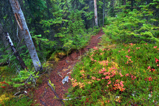 Jasper National Park Hiking Path