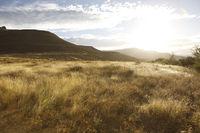 Abenddämmerung in der savanne