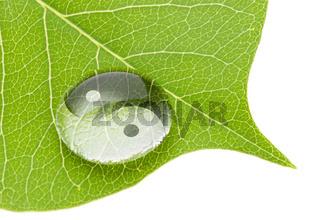 Yin yang symbol on water drop