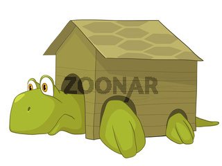Cartoon Character Turtle