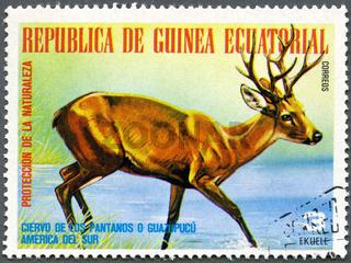 EQUATORIAL GUINEA - 1977: shows Marsh Deer, series South American Animals
