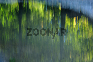 Spiegelung von Bäumen in einer Wasserpfütze