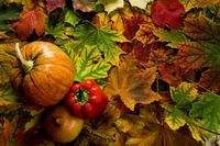 colorful leaves and vegetables during the autumn harvest