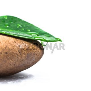 Stone and leaf