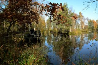 Pfrunger Ried - Ein Moor in Oberschwaben