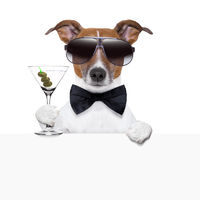 funny cocktail dog banner