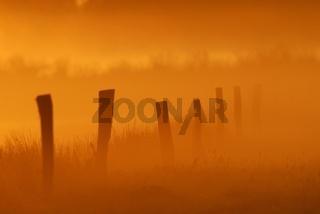Morgennebel im Recker Moor