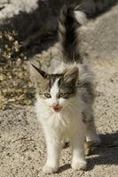 Kleines Kätzchen auf Futtersuche