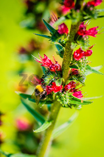 Wild field flower artistic background