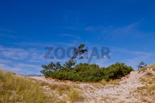 Duene mit Windfluechter auf Zingst