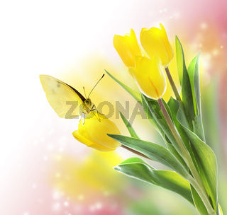Yellow Tulips with a Butterfly