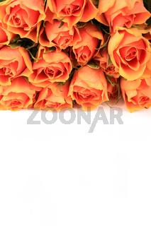 Strauß schöner Rosen