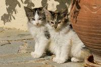 kleine Zwillinge