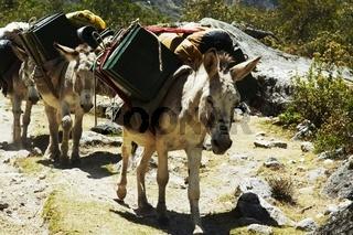 Expedition donkey