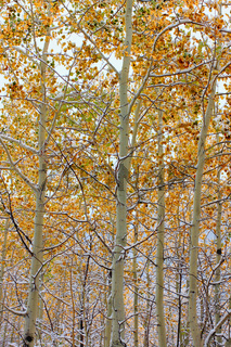 Bridger Teton National Forest