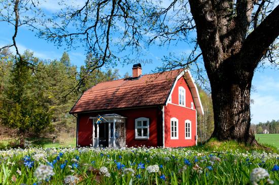Foto Rotes Holzhauschen In Smaland Schweden Bild 2954123