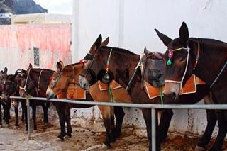 Donkeys in old mediterranean city