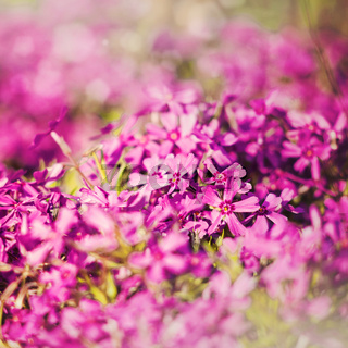 Grungy floral backgrounds  with very shallow focus for your design