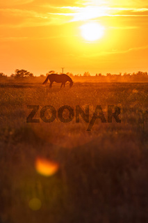 Pasture at sunset