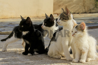 Junge Katzen auf Kefalonia