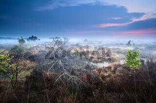dead fallen tree on swamp in misty sunset