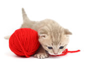 cat and red wool ball isolated on white