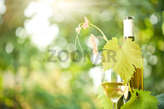 White wine bottle, grapevine and wineglass
