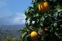 Ätna- Orangen