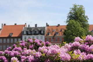 Blumen vor Häuserfassade