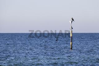 Pflock im Meer