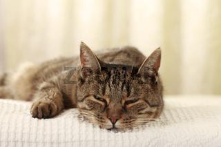 Hauskatze schläft