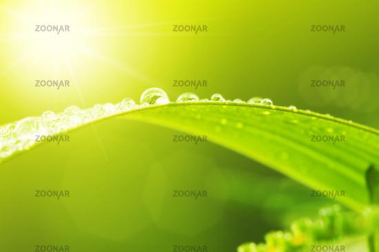 Green leaf with dews