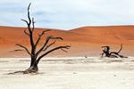 Tote Bäume in der Wüste Namib