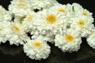Römische Kamille, Heilpflanze