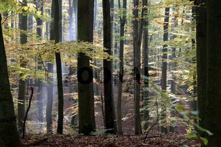 Unesco-Weltnaturerbe Grumsiner Buchenwald